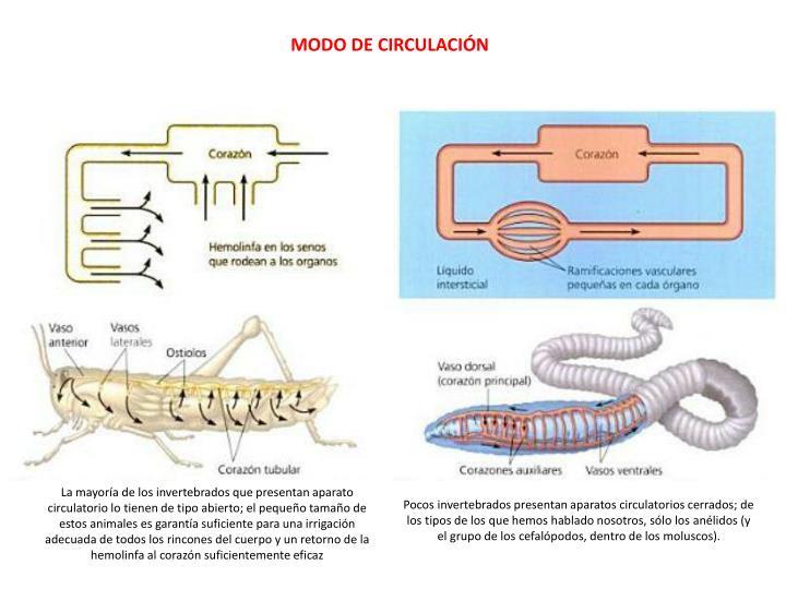 MODO DE CIRCULACIÓN