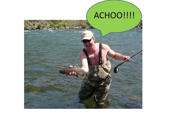 ACHOO!!!!