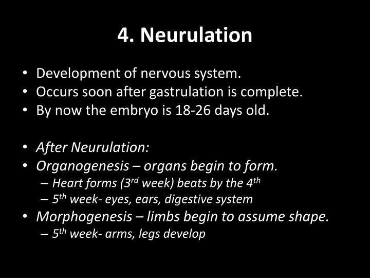 4. Neurulation