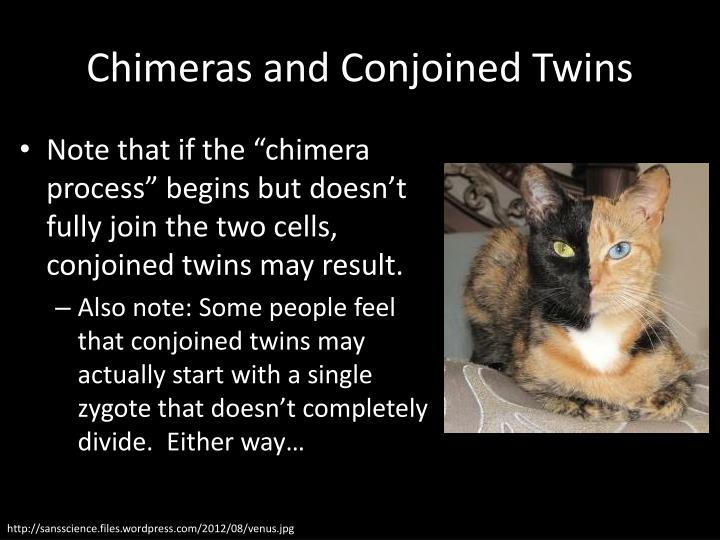 Chimeras and Conjoined Twins