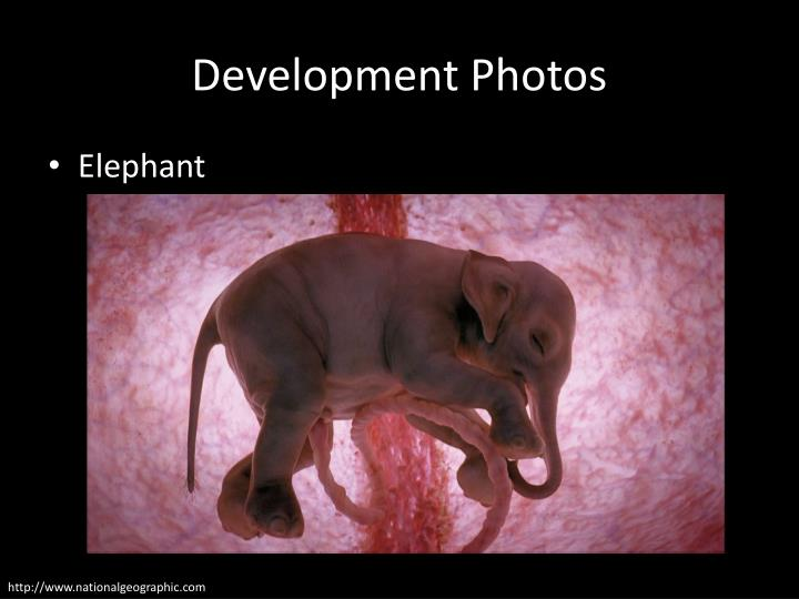 Development Photos