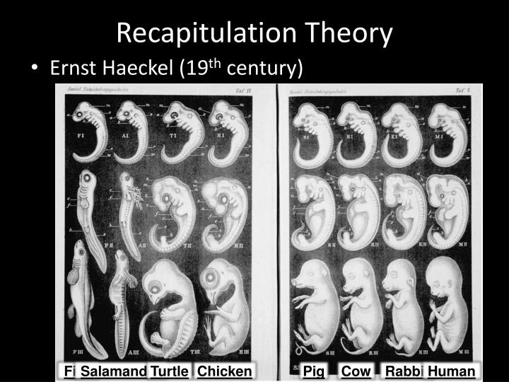 Recapitulation Theory