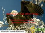 bald eagles and other things