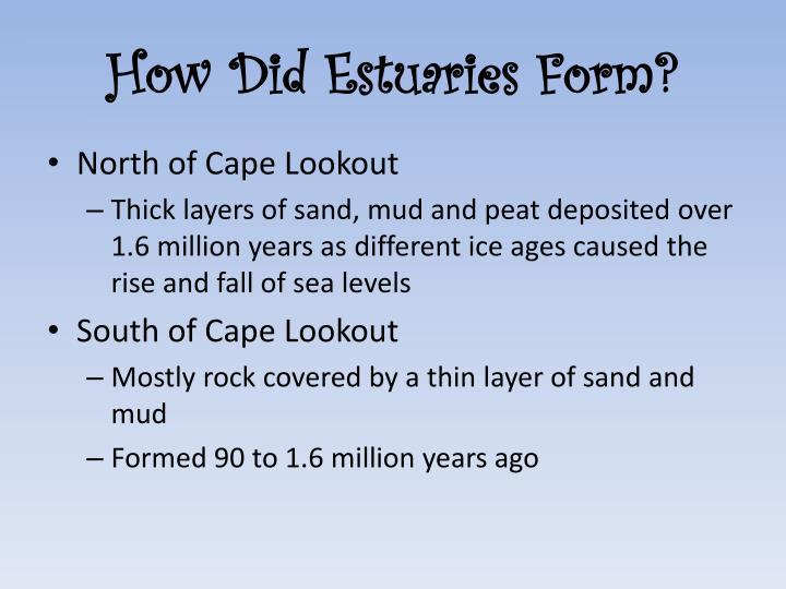 How Did Estuaries Form?