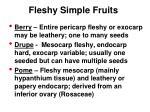 fleshy simple fruits1