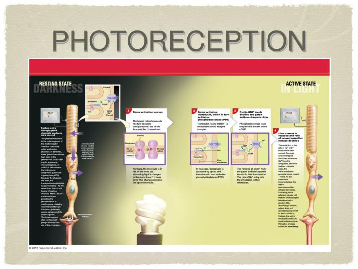 PHOTORECEPTION