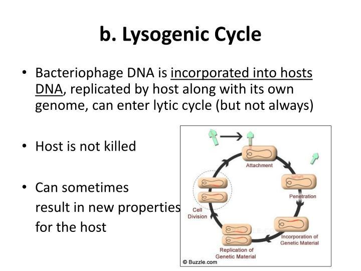 b. Lysogenic Cycle