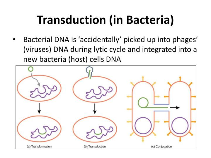 Transduction (in Bacteria)