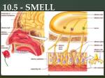 10 5 smell1