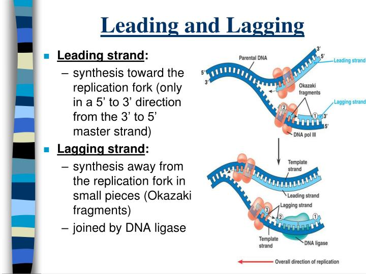 Leading and Lagging