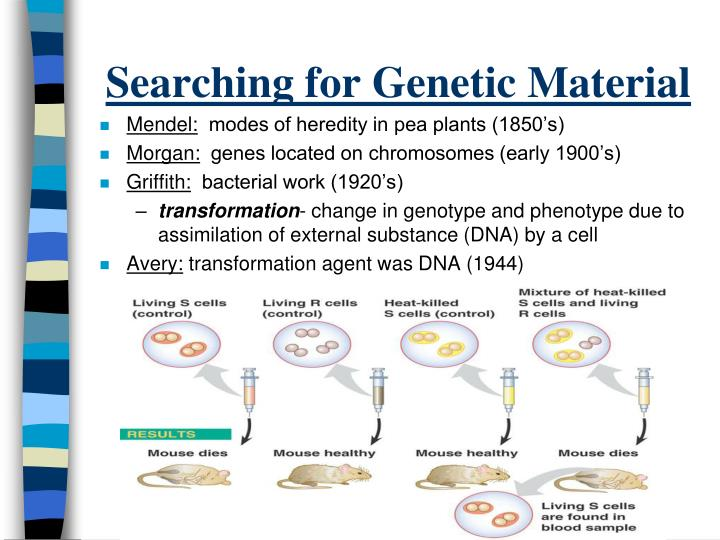 Searching for genetic material
