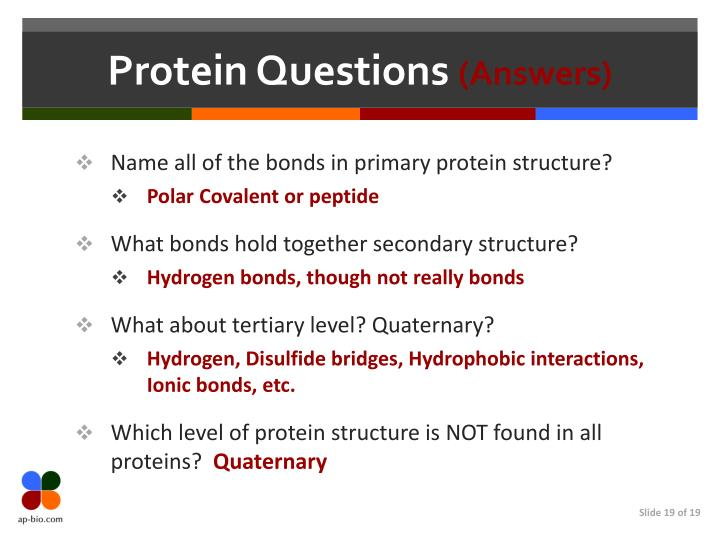 Protein Questions