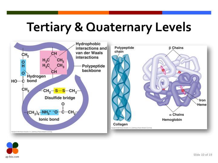 Tertiary & Quaternary Levels