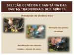 sele o gen tica e sanit ria das castas tradicionais dos a ores1