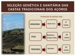 sele o gen tica e sanit ria das castas tradicionais dos a ores2