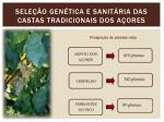 sele o gen tica e sanit ria das castas tradicionais dos a ores3