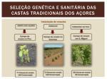 sele o gen tica e sanit ria das castas tradicionais dos a ores5