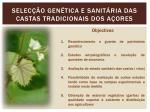 selec o gen tica e sanit ria das castas tradicionais dos a ores4