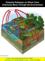 potential pathways on which toxic chemicals move through the environment