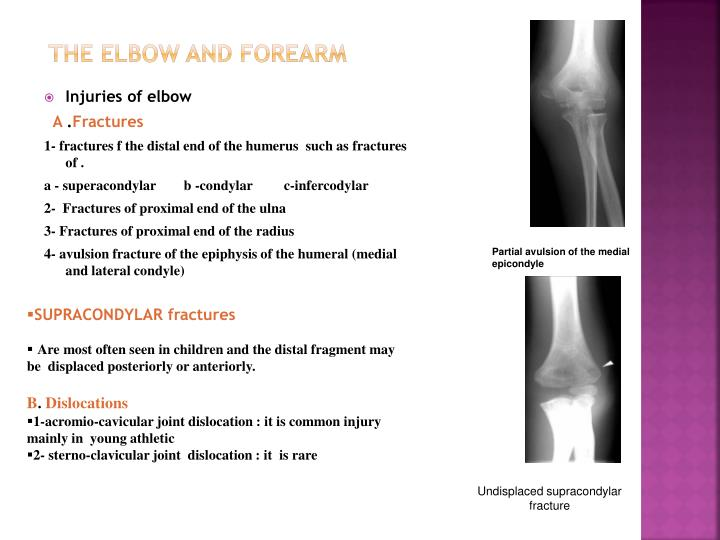 The elbow and forearm