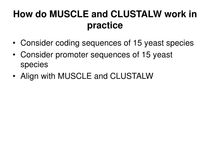 How do MUSCLE and CLUSTALW work in practice