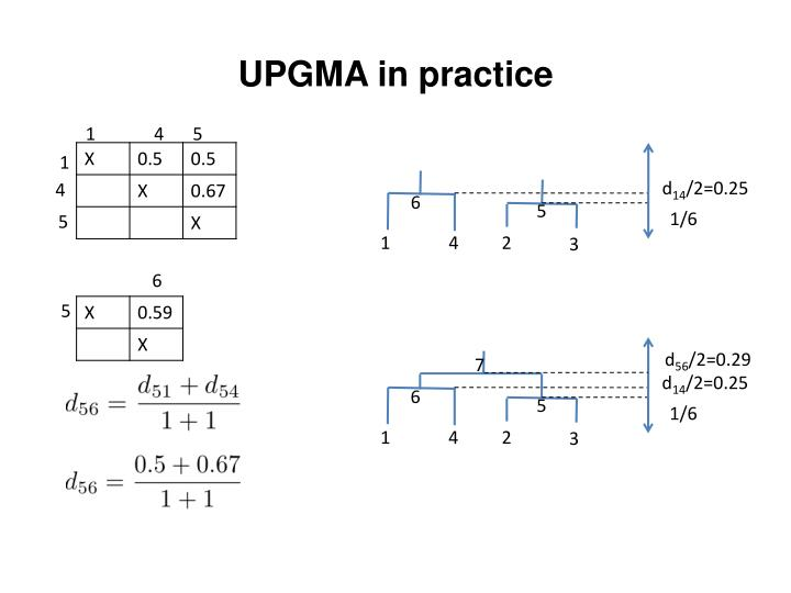 UPGMA in practice