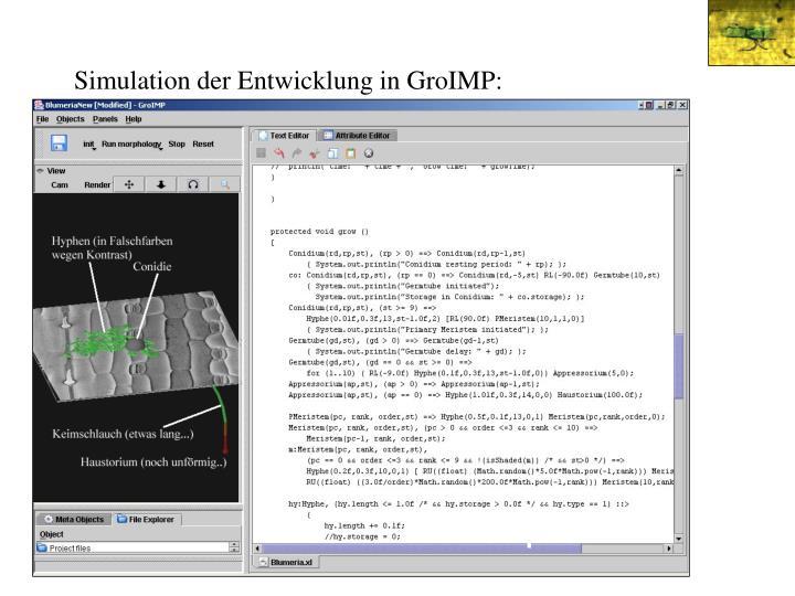 Simulation der Entwicklung in GroIMP: