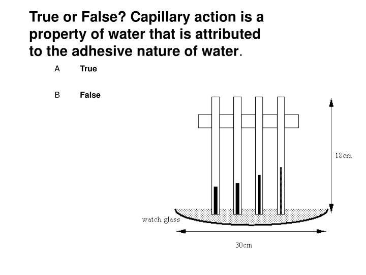 True or False? Capillary action is a property of water that is attributed to the adhesive nature of water