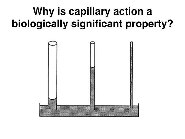 Why is capillary action a biologically significant property?