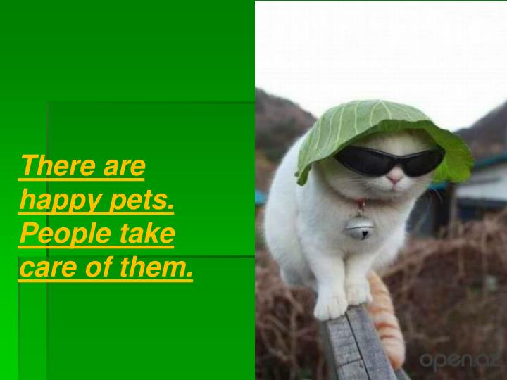 There are happy pets. People take care of them.