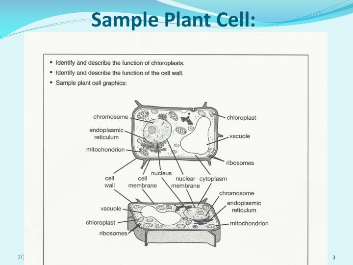 Sample plant cell
