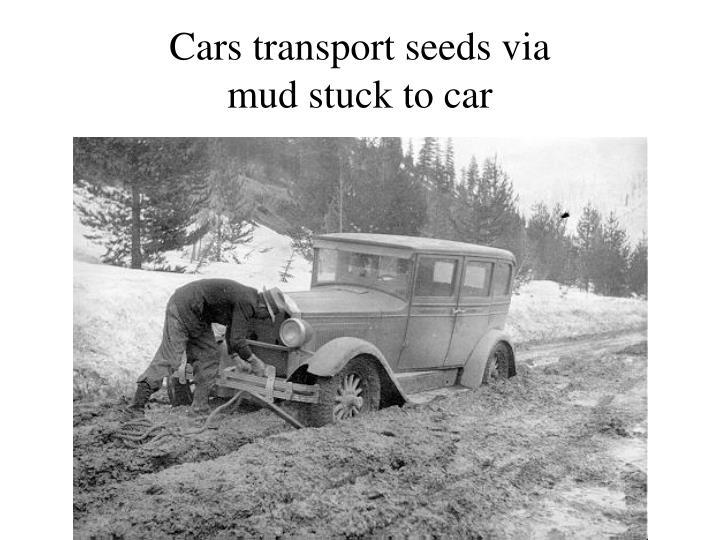 Cars transport seeds via