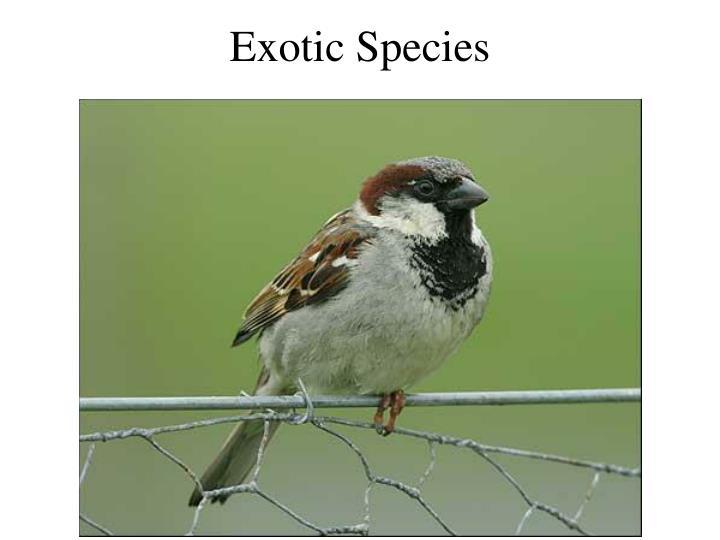 Exotic Species