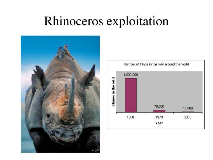 Rhinoceros exploitation