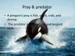 pray predator