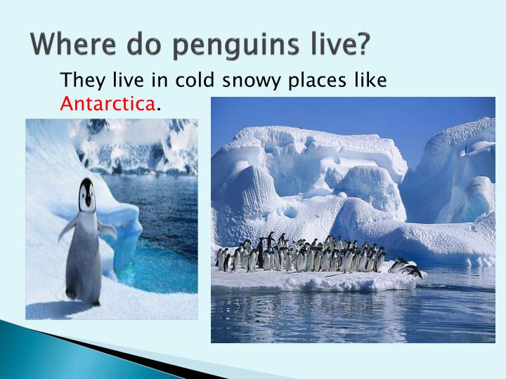 Where do penguins live