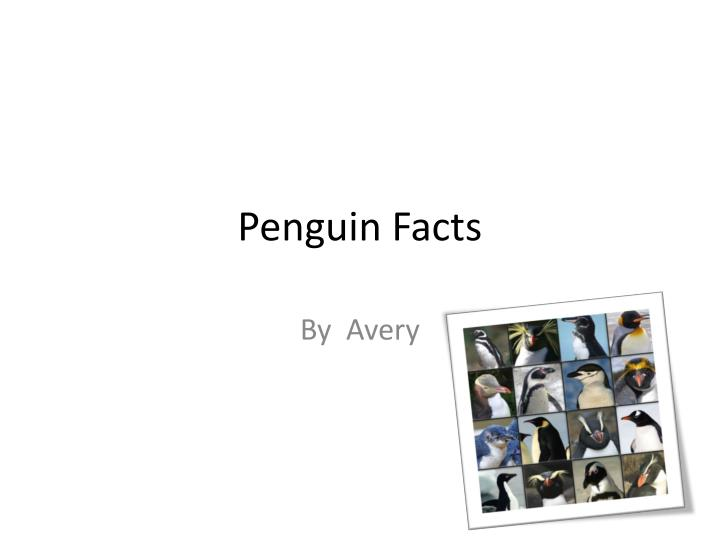 penguin facts n.