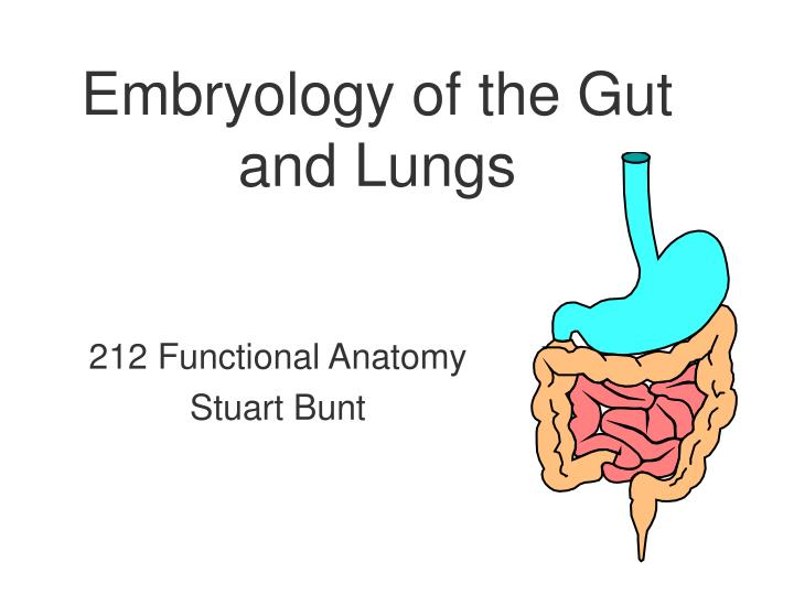 embryology of the gut and lungs n.