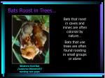 bats roost in trees