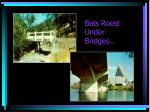 bats roost under bridges