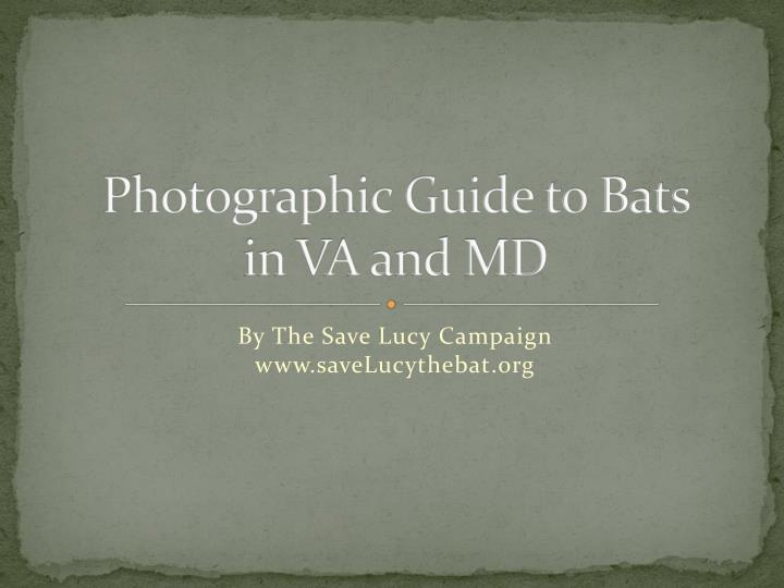 photographic guide to bats in va and md n.