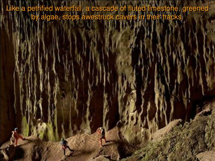 Like a petrified waterfall, a cascade of fluted limestone, greened by algae, stops awestruck cavers in their tracks.