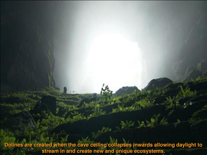 Dolines are created when the cave ceiling collapses inwards allowing daylight to stream in and create new and unique ecosystems.