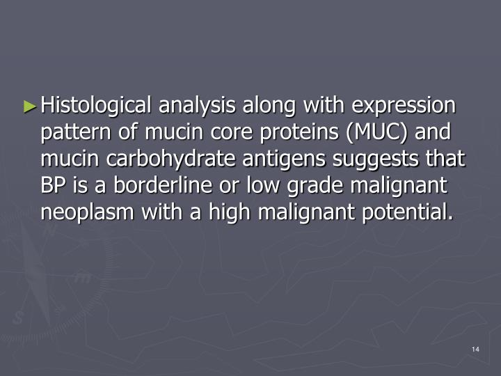 Histological analysis along with expression pattern of mucin core proteins (MUC) and mucin carbohydrate antigens suggests that BP is a borderline or low grade malignant neoplasm with a high malignant potential.