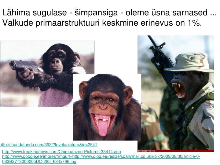 Lähima sugulase - šimpansiga - oleme üsna sarnased ...
