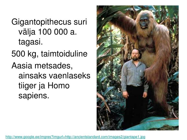Gigantopithecus suri välja 100 000 a. tagasi.