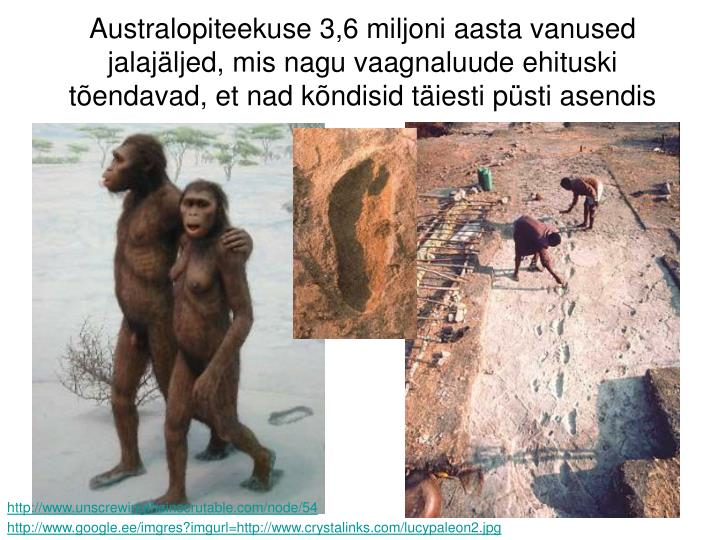 Australopiteekuse 3,6 miljoni aasta vanused jalajäljed, mis nagu vaagnaluude ehituski tõendavad, et nad kõndisid täiesti püsti asendis