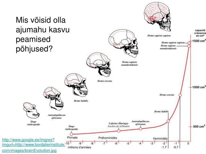 Mis võisid olla ajumahu kasvu peamised põhjused?