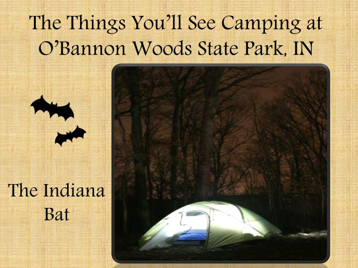the things you ll see camping at o bannon woods state park in n.