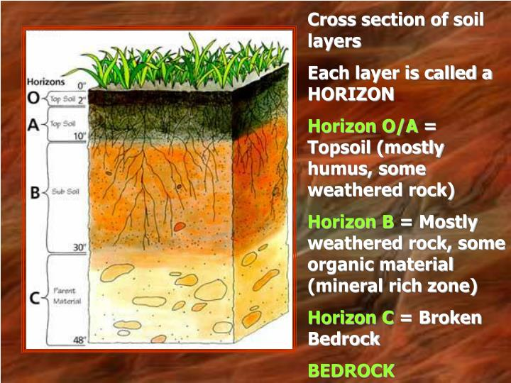 Cross section of soil layers